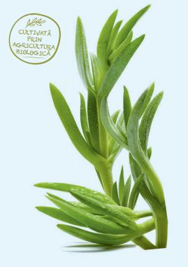 planta edulis